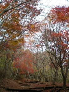 11月秋の丹沢・塔ノ岳~尊仏山荘で1泊